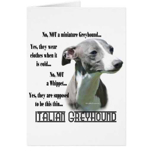 greyhound gift card italian greyhound faq card zazzle 2243