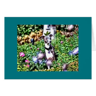 Italian Greyhound In the Garden Note Card