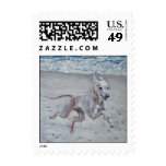 Italian Greyhound Postage Stamp