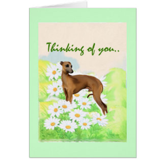 Italian Greyhound: Thinking of You Card