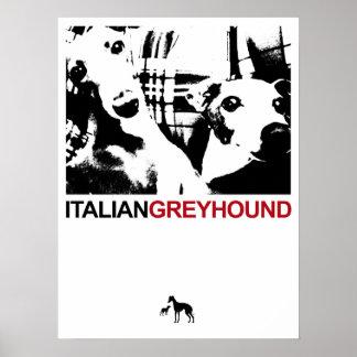 Italian Greyhound White Posters