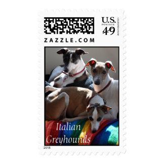 Italian Greyhounds Postage Stamp