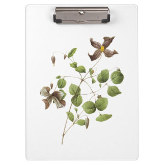 Italian leather flower(Clematis) by Redouté Clipboard