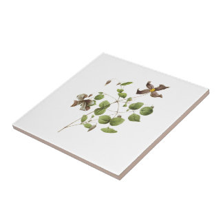 Italian leather flower(Clematis) by Redouté Small Square Tile