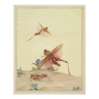 ITALIAN LOCUSTS - Insect Book Illustration Print