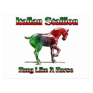 Italian Stallion..  Hung Like A Horse Postcard