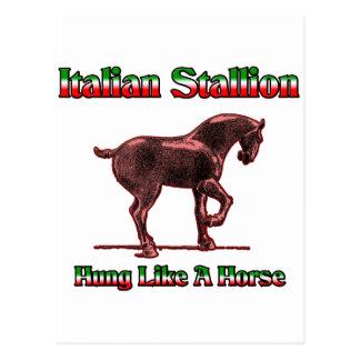 Italian Stallion...  Hung Like A Horse Postcard