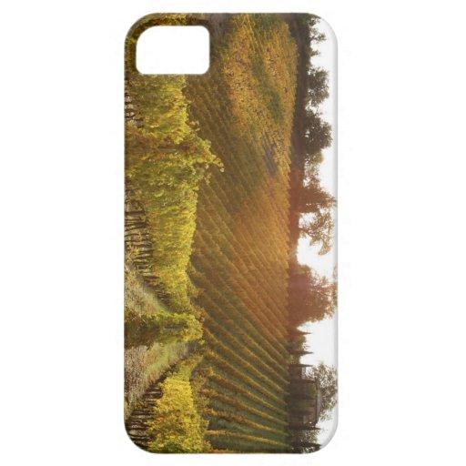 Italian vineyard in Tuscany iPhone 5 Covers