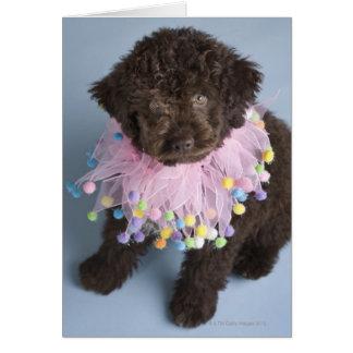Italian Water Dog (Lagotto) Puppy Card