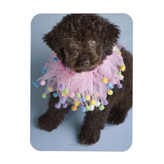 Italian Water Dog (Lagotto) Puppy Magnet