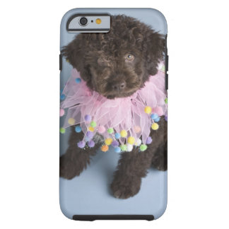 Italian Water Dog (Lagotto) Puppy Tough iPhone 6 Case