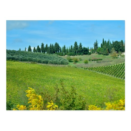 Italian Wine Country Post Card