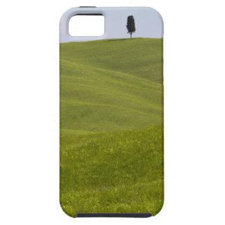 Italien, Toskana, Val D'Orcia, auf H de Baum del e iPhone 5 Funda