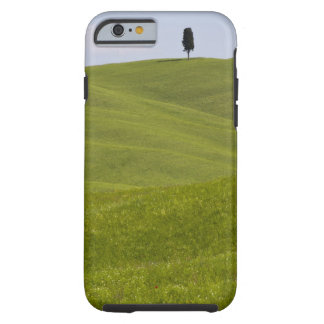Italien, Toskana, Val D'Orcia, auf H de Baum del Funda De iPhone 6 Tough