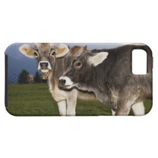 Italy, Alto Adige iPhone 5 Covers