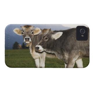 Italy, Alto Adige Case-Mate iPhone 4 Cases