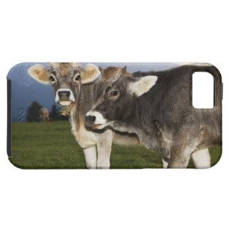 Italy, Alto Adige iPhone SE/5/5s Case