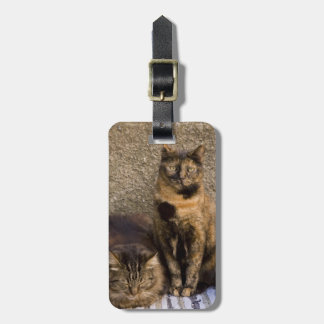 Italy, Cinque Terre, Vernazza. Three cats beside Bag Tag