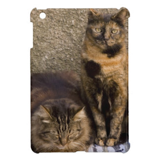 Italy, Cinque Terre, Vernazza. Three cats beside Case For The iPad Mini