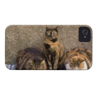 Italy, Cinque Terre, Vernazza. Three cats beside iPhone 4 Cover