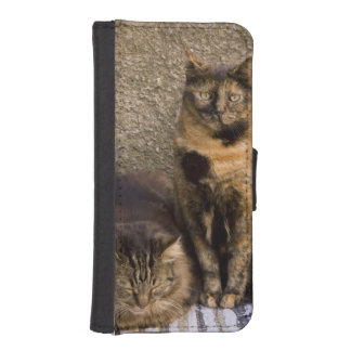 Italy, Cinque Terre, Vernazza. Three cats beside iPhone 5 Wallet Cases