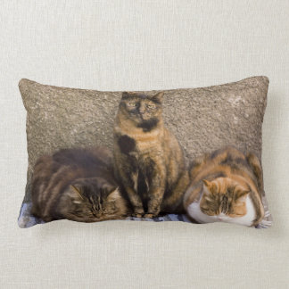 Italy, Cinque Terre, Vernazza. Three cats beside Lumbar Pillow