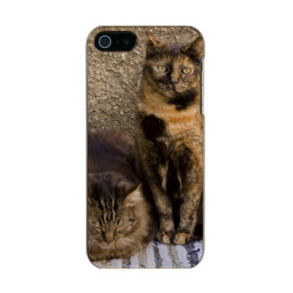 Italy, Cinque Terre, Vernazza. Three cats beside Metallic Phone Case For iPhone SE/5/5s