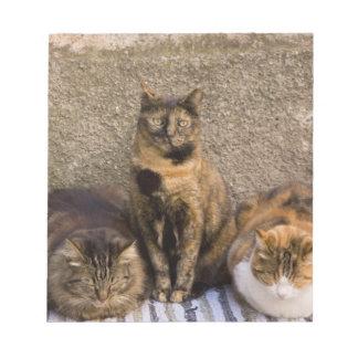 Italy, Cinque Terre, Vernazza. Three cats beside Notepad