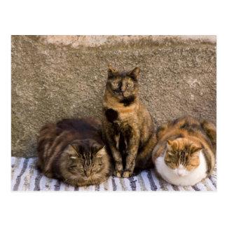 Italy, Cinque Terre, Vernazza. Three cats beside Postcard