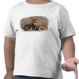 Italy, Cinque Terre, Vernazza. Three cats beside Tee Shirt