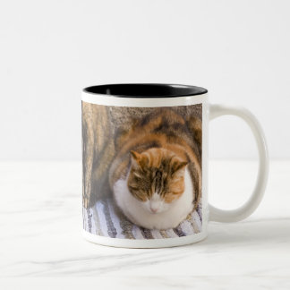 Italy, Cinque Terre, Vernazza. Three cats beside Two-Tone Coffee Mug