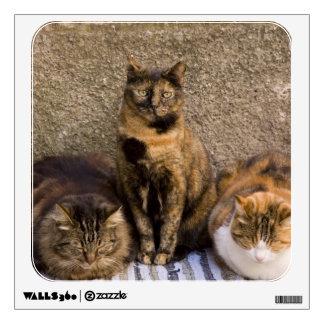 Italy, Cinque Terre, Vernazza. Three cats beside Wall Sticker