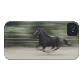 Italy, Latium, Maremma horse galloping (blurred iPhone 4 Case-Mate Case