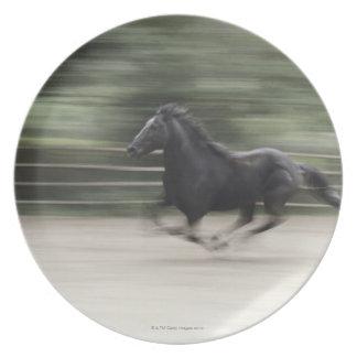 Italy, Latium, Maremma horse galloping (blurred Plate