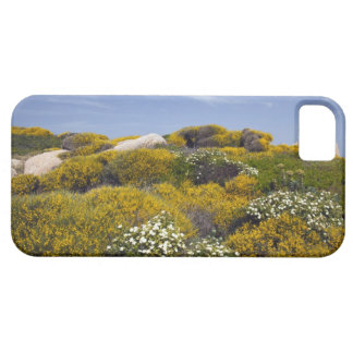 Italy Sardinia Santa Teresa Gallura Capo 3 iPhone 5 Cases