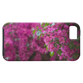 Italy, Sicily, Cefalu, Flowered Courtyard by iPhone SE/5/5s Case