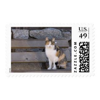 Italy, Trentino - Alto Adige, Bolzano province, 3 Postage Stamp