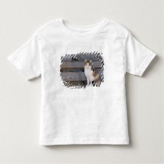 Italy, Trentino - Alto Adige, Bolzano province, 3 Toddler T-shirt