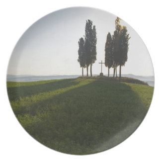 Italy, Tuscany, Cypress Trees in Tuscany with Dinner Plates