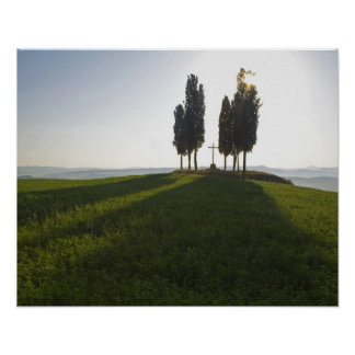 Italy, Tuscany, Cypress Trees in Tuscany with Poster