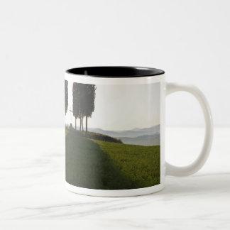 Italy, Tuscany, Cypress Trees in Tuscany with Two-Tone Coffee Mug
