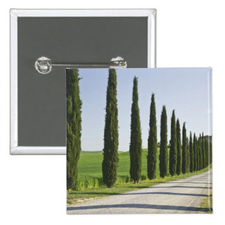 Italy, Tuscany. Cypress trees line driveway to Button