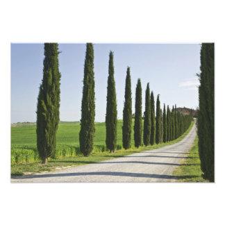Italy, Tuscany. Cypress trees line driveway to Photo Print