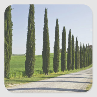 Italy, Tuscany. Cypress trees line driveway to Square Sticker