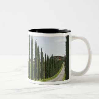 Italy, Tuscany. Cypress trees line driveway to Two-Tone Coffee Mug
