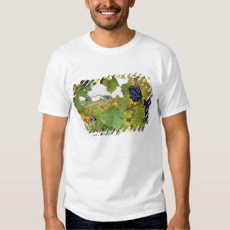 Italy, Tuscany Farmhouse viewed through T Shirt