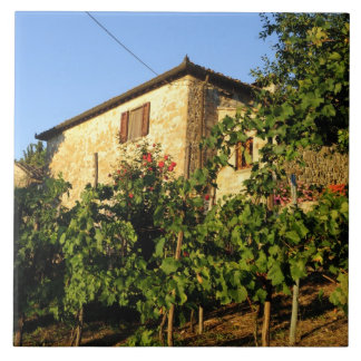 Italy, Tuscany, Greve. Late summer wine scenes Ceramic Tile
