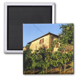 Italy, Tuscany, Greve. Late summer wine scenes Refrigerator Magnets