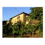 Italy, Tuscany, Greve. Late summer wine scenes Postcard