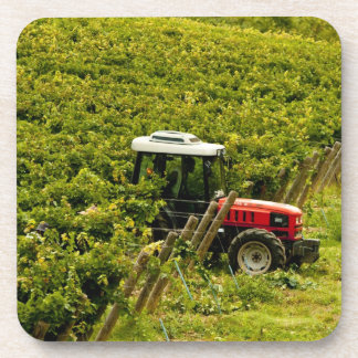 Italy, Tuscany, Greve. Pickers at work during Drink Coasters